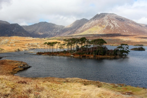 island-of-trees-in-a-bare-connemara-landscape-pierre-leclerc.jpg