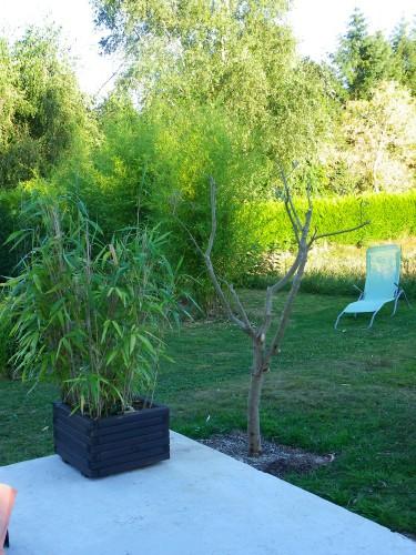 jardin, olivier, physalis, été